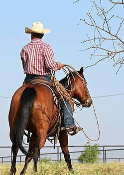Texas Cowboy by Elizabeth Hart