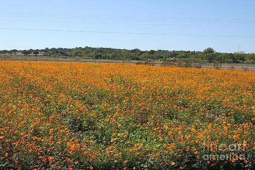 Texas Flower Field by Nancy G Burgess