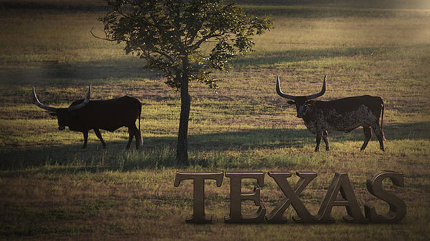 Texas Long Horn by Kelly Rader