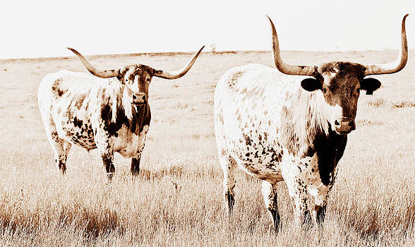 Texas Pair by Elizabeth Hart