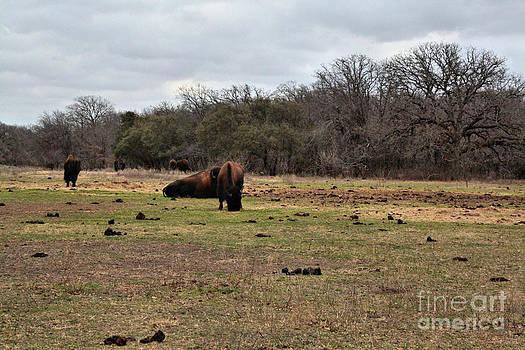 Texas Prairie by Kelly Christiansen