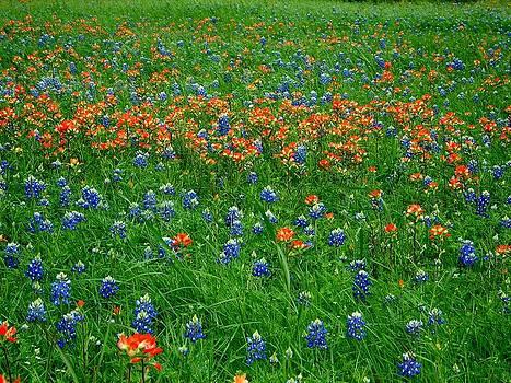 Texas Wild Flowers by Kenneth Lim