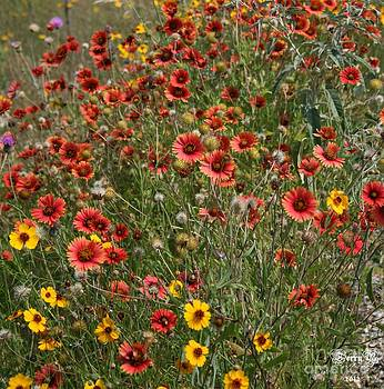 Texas Wildflowers by Terry Burgess