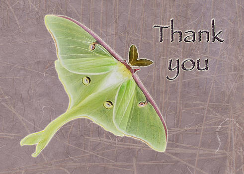 Mother Nature - Thank You Greeting Card - Luna Moth