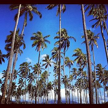 That's A Lot Of Palm Trees by Michael Misciagno