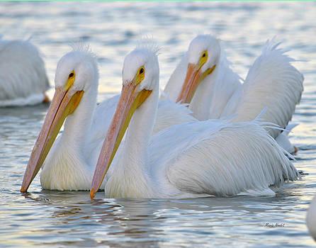 The 3 Amigos by Maria Nesbit