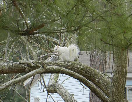 The Albino Squirrel by Melody McCoy