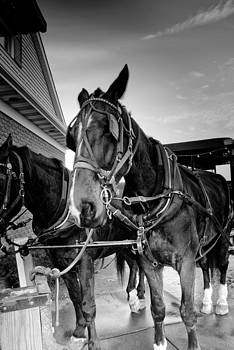 The Amish Working Horse by Heidi Reyher