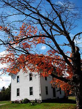 The Autumn Tree by Anna McElhany