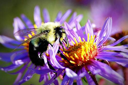 The Best is Yet to Bee by Amy Schauland