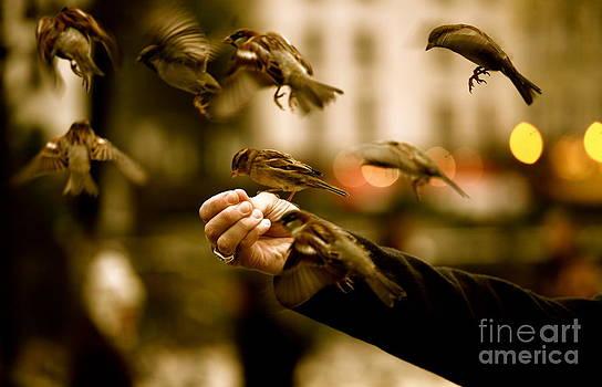 The Birds by Zarija Pavikevik