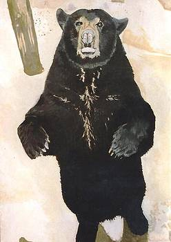 The Black Bear by Terry Forrest