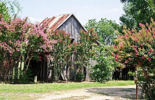 The Blooming Barn by Lisa Moore