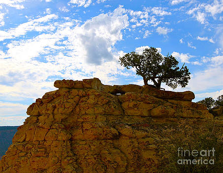 The Bodhi Tree Grand Canyon style by Bianca Collins