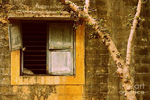 The broken window by Vishakha Bhagat