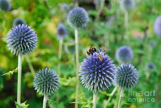 The Buzz in the Garden by John Kelly