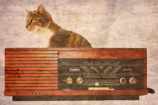 The Cat and the Radio by Angela Bruno