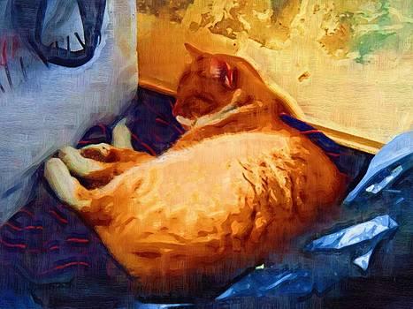 The Cat by Morgana Blackcat