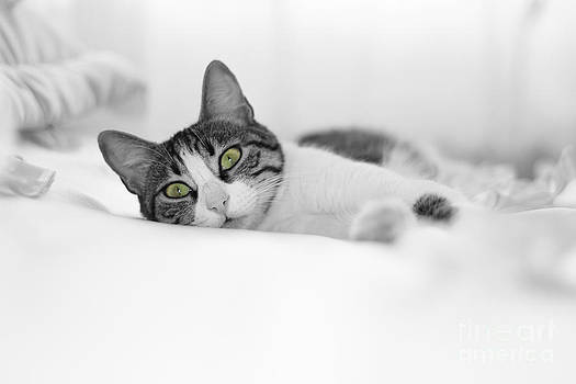 The Cat  by Zafer GUDER