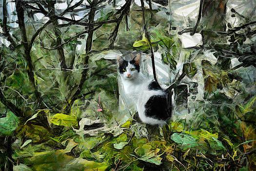 Zoran Buletic - The Cat