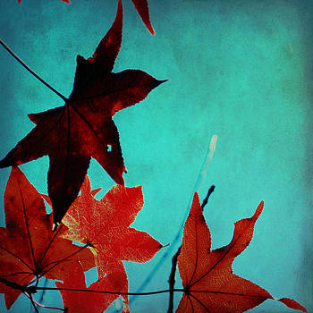 The Color of Fall by Sharon Kalstek-Coty