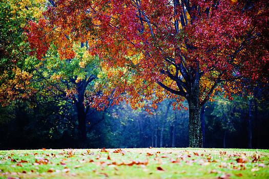 The Colorful Landscape by Katya Horner