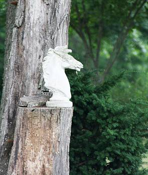 The Concrete Horse Head by Sharon Spade - Kingsbury