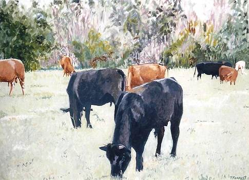 The Cows by Terry Forrest