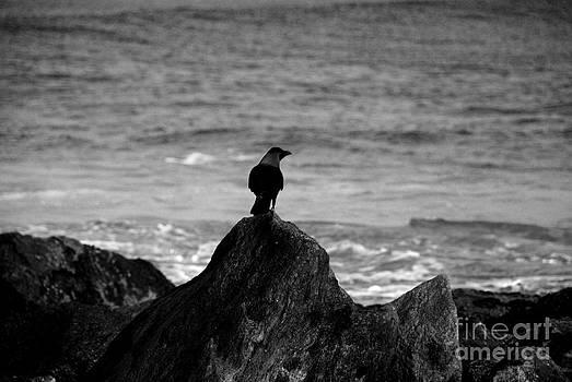 Pravine Chester - The Crow