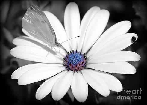 The Crowded Flower by LillyAnn Venturino