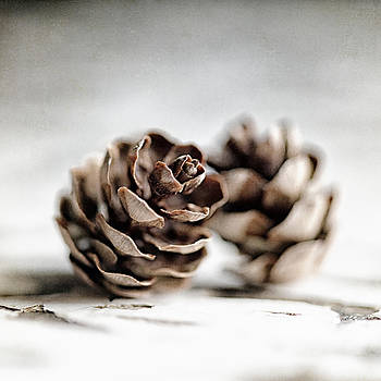 Lisa Russo - The Dance of the Pinecones