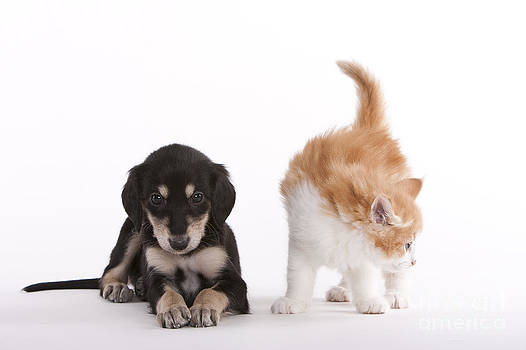 The differenz between cat and dog by Martina Metschulat