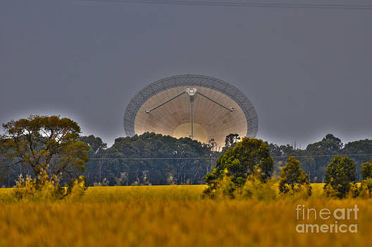 The Dish by Joanne Kocwin