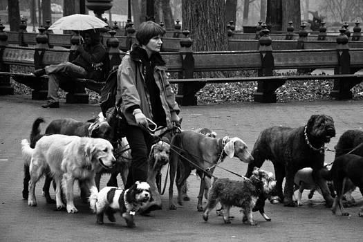 The Dog Walker by Heidi Reyher