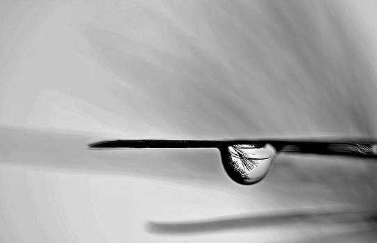 The drop by Suzanne Blais