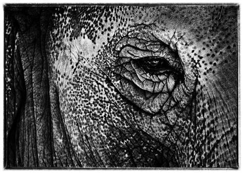 Hakon Soreide - The Elephant