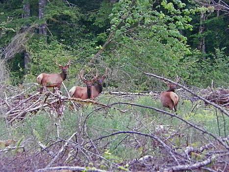 The Elks Club by Seth Shotwell