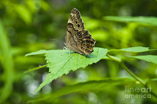 Christine Kapler - The Energy of Life...butterfly on a green leaf