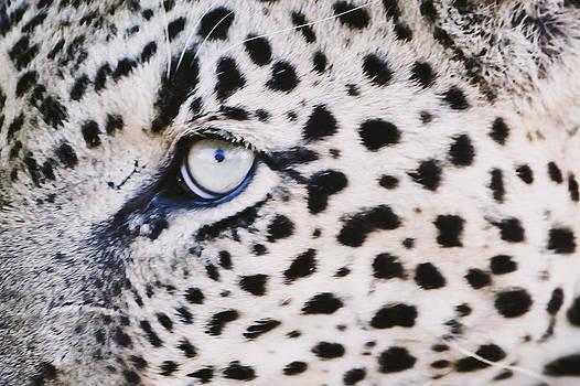 The Eye by Lisa Rich