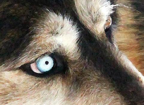 The Eye by Stellina Giannitsi