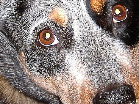 The Eyes of My Best Friend by Donna Parlow