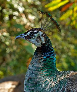 Carmen Del Valle - The Female Peacock