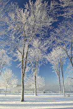 The frost by Suzanne Blais