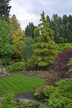 The Garden at Vancouver Island by Ann Marie Chaffin
