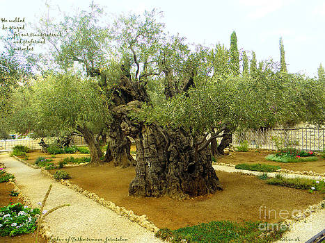 The Garden of Gethsemane by Robin Coaker