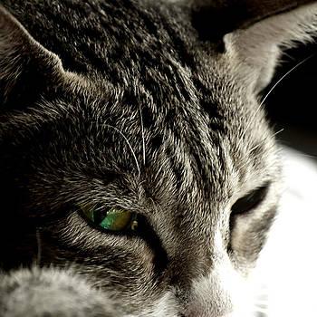 The glistening eye by Somnath Chakraborty
