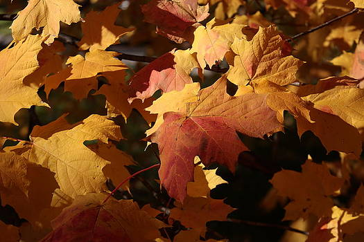 The Golden Days of October by Lyle Hatch
