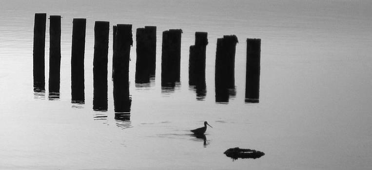 The Gotwit by Robert Walker