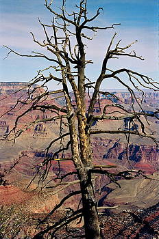 The Grand Canyon  by Amy Savell
