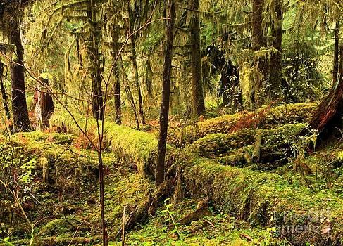 Adam Jewell - The Hall Of Mosses